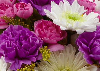 Terre Haute, IN 47807 - Send flowers and gifts for any occasion from Poplar Flower Shop Inc